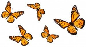 Are there butterflies buzzing around in your stomach?